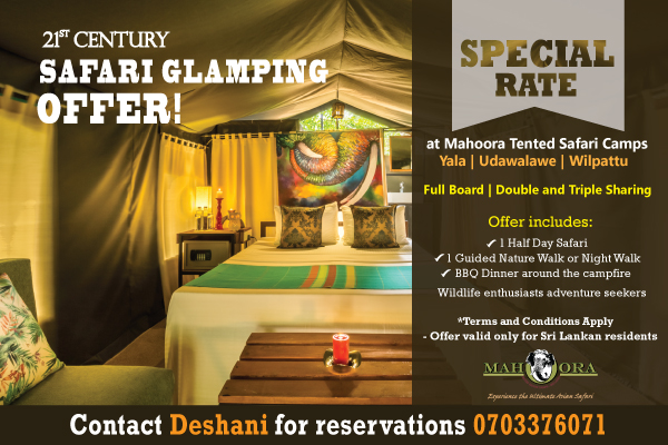 Safari Glamping Offer mahoora