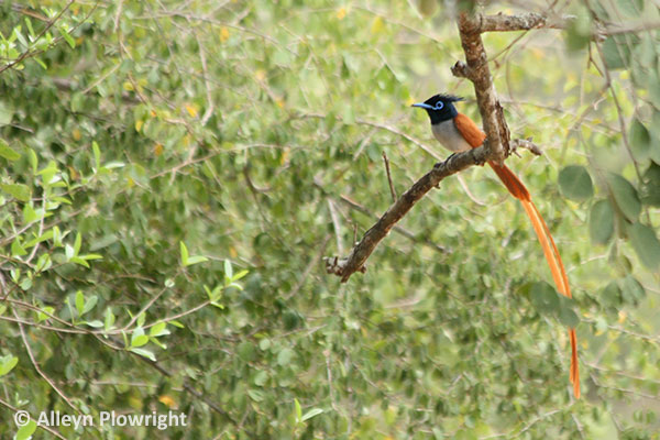 birding at yala national park by our guest alleyn takenplowright from sweden