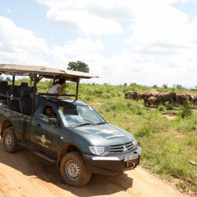 Mahoora Jeep Safaris