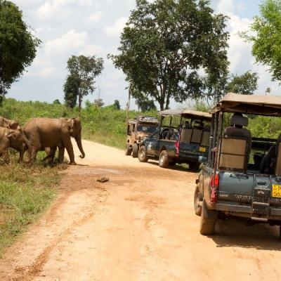 Jeep Safaris At Udawalawe